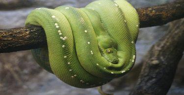 install-python